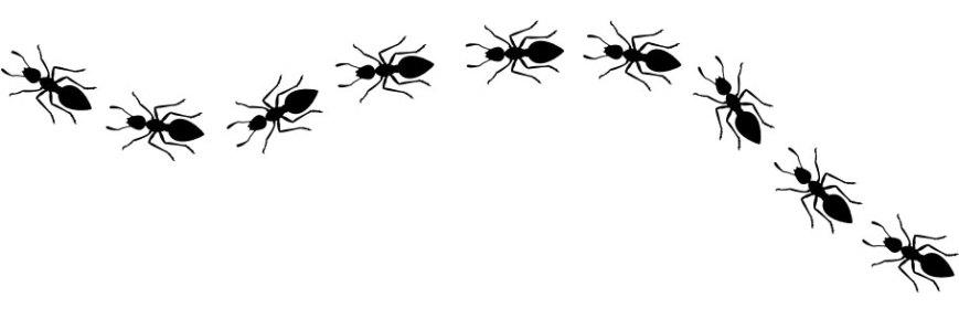 ant-white-865