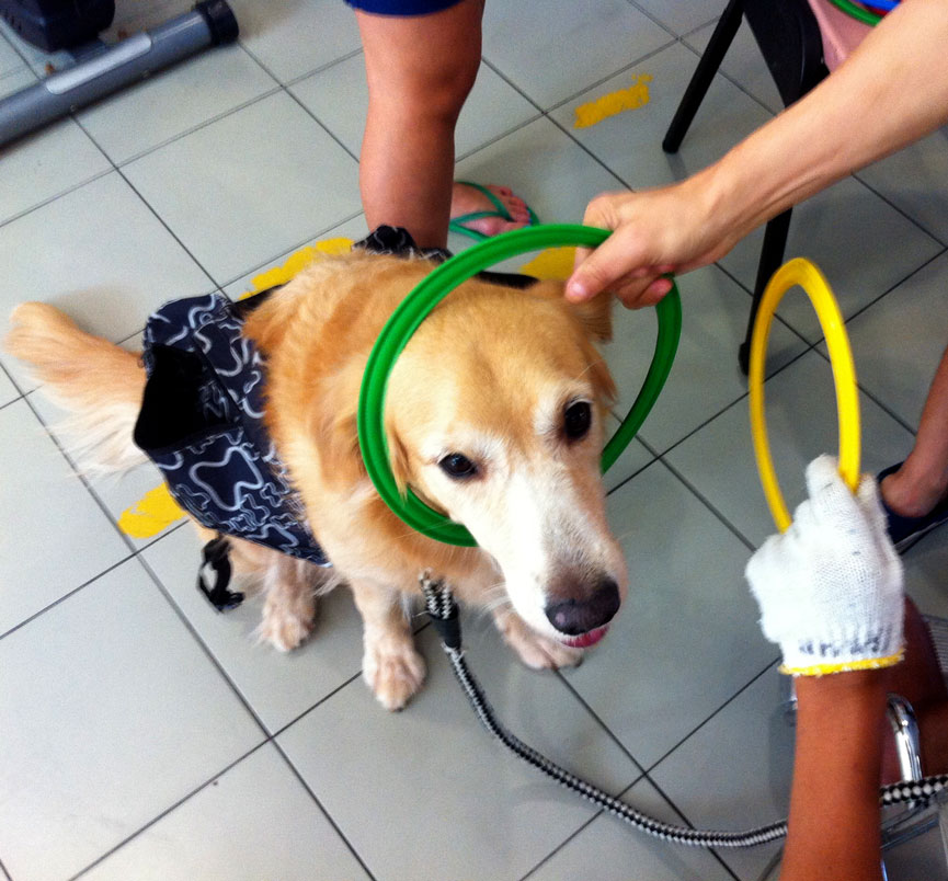 Spread Some Puppy Love By Volunteering With Your Dogspread Some Puppy Love By Volunteering With Your Dog Vanilla Beige