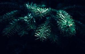 A Very Vanilla Christmas: Make the Silly Season Green