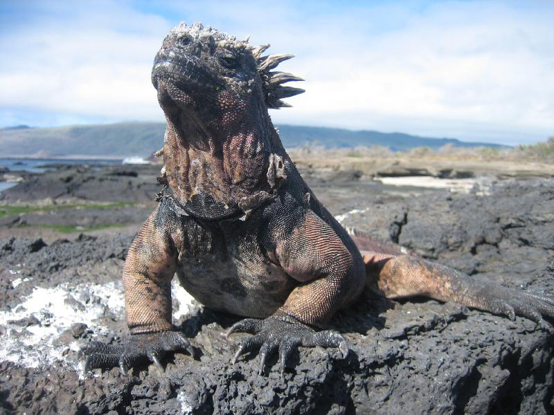 Image result for pics   desert lizard monsters