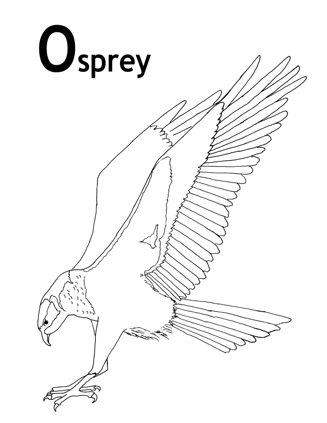 OSPREY PICTURES PICS IMAGES AND PHOTOS FOR YOUR TATTOO