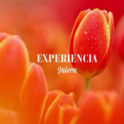 Mi experiencia en Quieru.com
