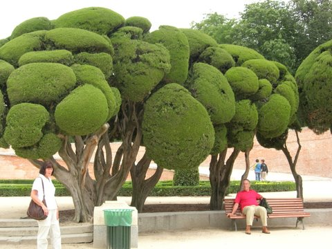 Lubeck trees in real life