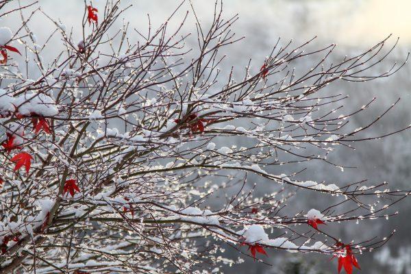 winter takken