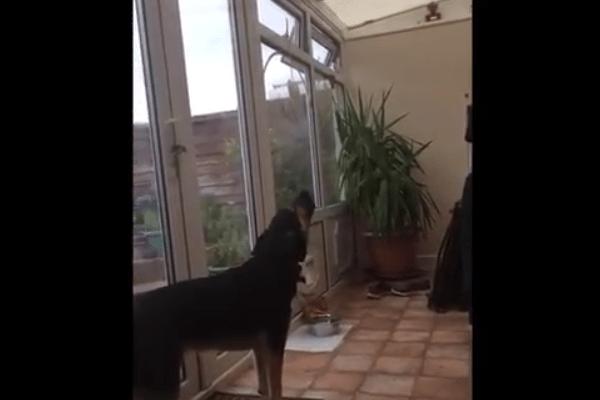 hond zingt zingende opera