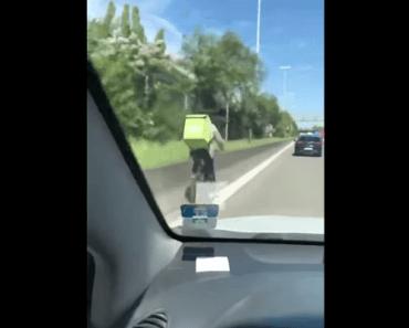 fietser fiets fietskoerier ring brussel