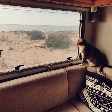 Interior de la Autocaravana donde se ve el sillón y la gata mirando por la ventana, estáaparcada en Creixell