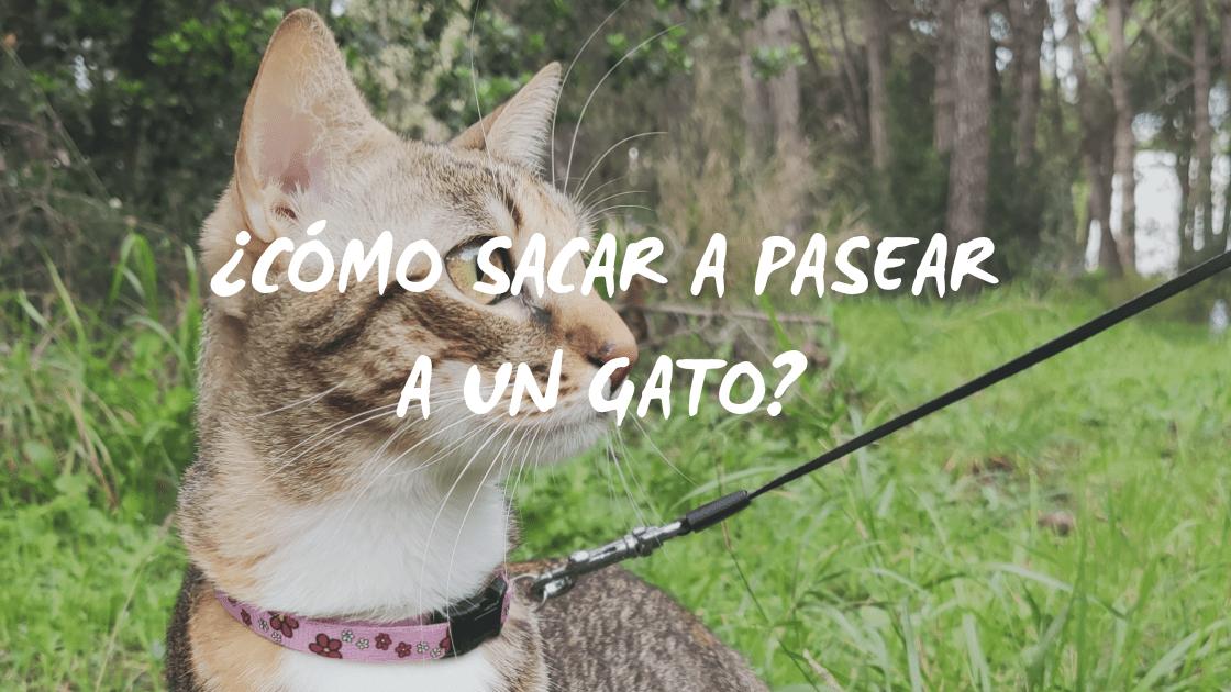 Enlace a ¿Cómo sacar a pasear a un gato?