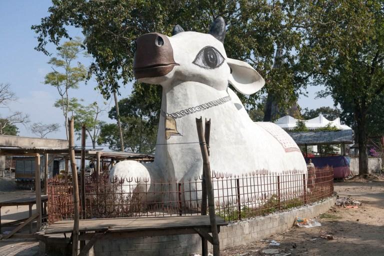 Obří kráva v indickém Assamu
