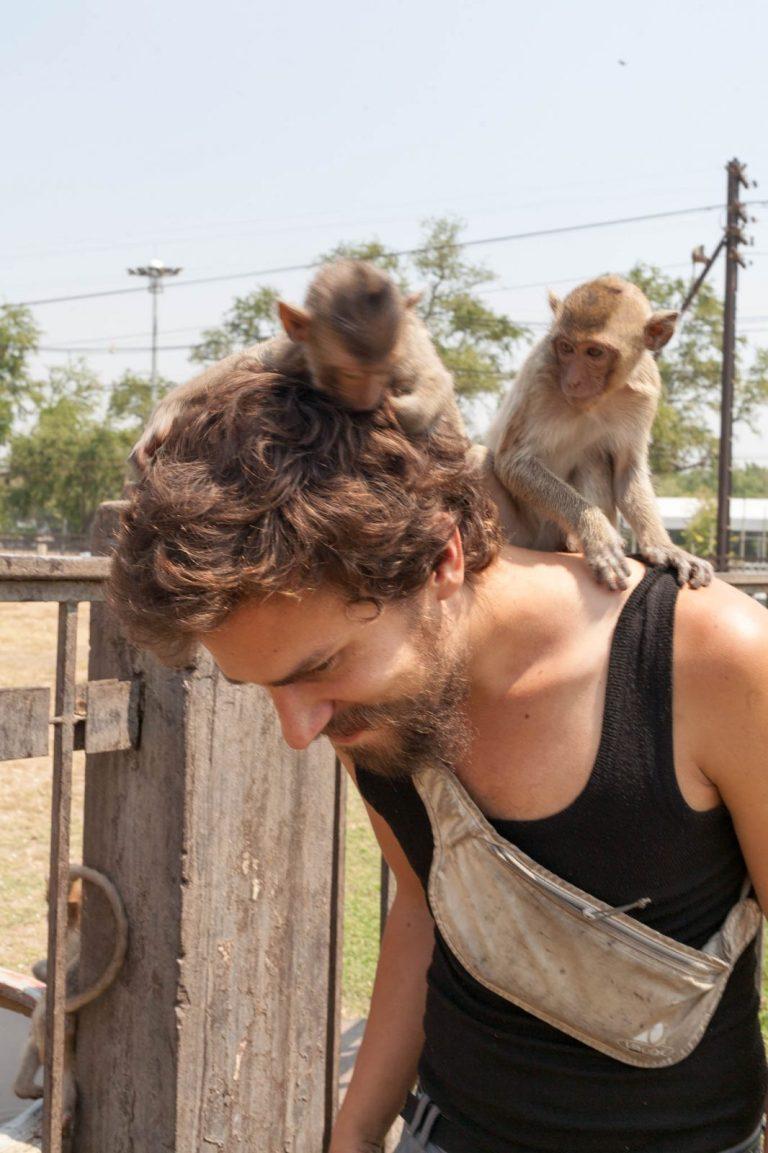 Opice na hlavě