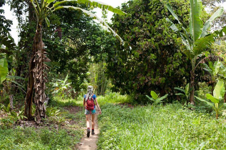 Ivanka putuje džunglí