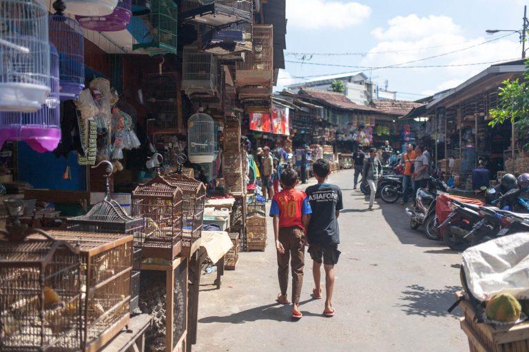 Trh s mazlíčky v Malangu