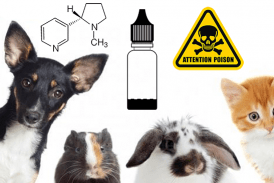 DOSSIER: E-liquids, nicotine, watch out for your pets!