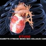 ETUDE : La e-cigarette stresse moins nos cellules cardiaques.