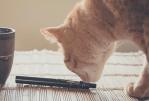 ЗДОРОВЬЕ: Ветеринары обеспокоены отравлением, вызванным электронными сигаретами.
