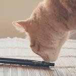 ЗДОРОВЬЕ: Ветеринары обеспокоены отравлением от электронных сигарет.