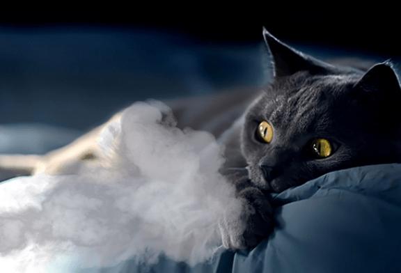 SANTE : Le tabagisme passif, un danger pour nos animaux !