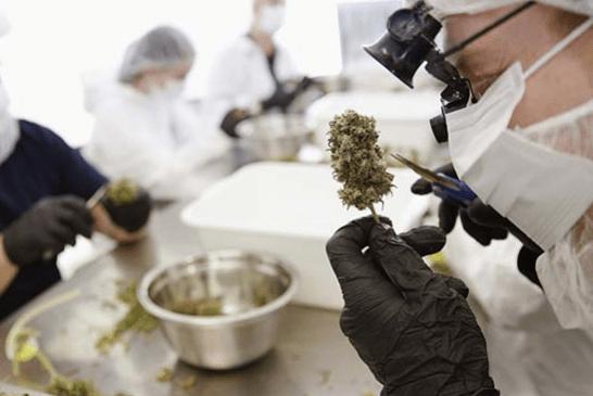 SUISSE : Le tabac encrasserait bien plus les artères que le cannabis !