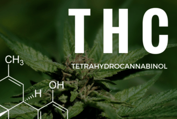 FRANCE: An inadvertent legalization of THC, the molecule present in cannabis.