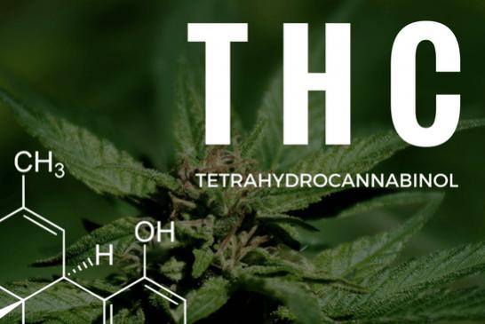 FRANCE : Une légalisation par erreur du THC, la molécule présente dans le cannabis.