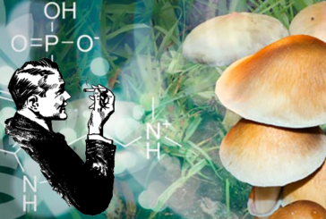 SENSAZIONI: farmaci psicotropi per combattere la dipendenza dal tabacco?