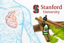 ÉTUDE : Des arômes utilisés pour la vape peuvent augmenter le risque de maladie cardiaque