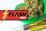 美国:俄勒冈州计划禁止在大麻vape中使用调味料