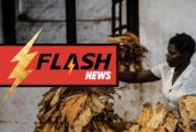 喀麦隆:反对外国干预烟草制品可追溯性的许多批评