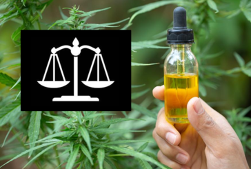 DROIT : L'Europe juge illégale l'interdiction du CBD en France !