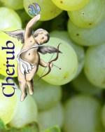 Crazy Grape Cherub E Liquid
