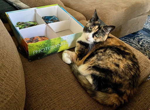 Calico Cat curled up with game box