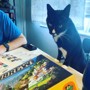 Black and White Cat with front paws on a table looking over the Brew game box