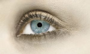 biological eye