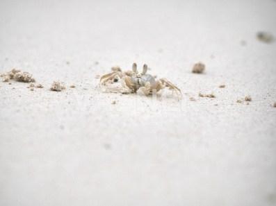 Crab on the beach image panel heater