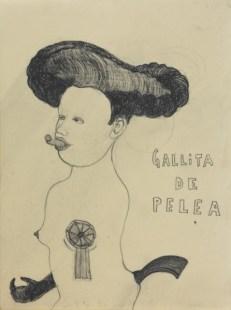 09_Gallita_de_pelea