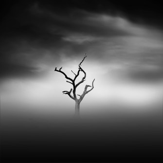 misty scapes_I