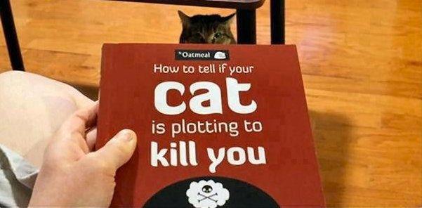 gato_logo