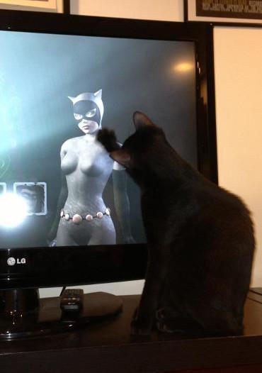 Cómo poner burraco a tu gato