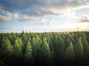 Luonnonsuojeluliitto vaatii ilmastobudjettia