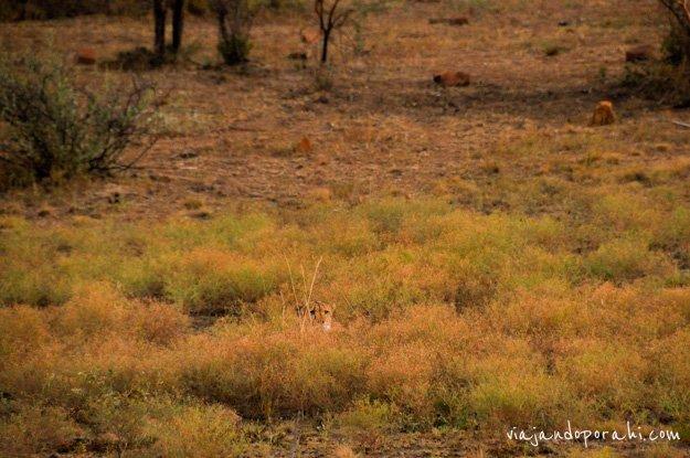 safari-sudafrica-18