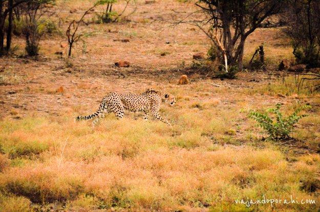 safari-sudafrica-17