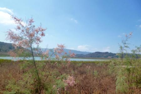View of Lake Casitas from the patio.
