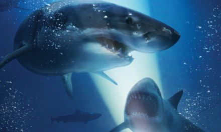 <em>47 METERS DOWN</em> | Shark story sinks in deep waters