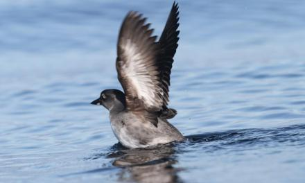 NATURAL BALANCE | Saving rare seabirds on Santa Cruz Island