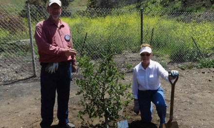 KINDNESS CORNER | Rotary plants trees in Camarillo park hit by Hill Fire