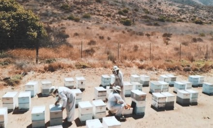 HIVE HEISTS | Local beekeepers hit by thieves at a high cost