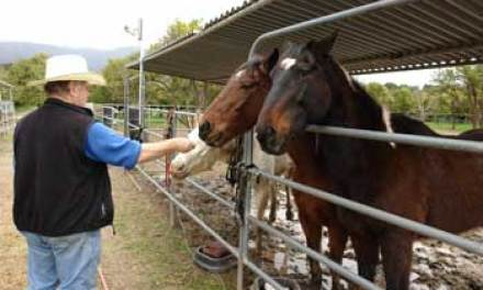 Equine euthanasia, abandonment linked to bad economy