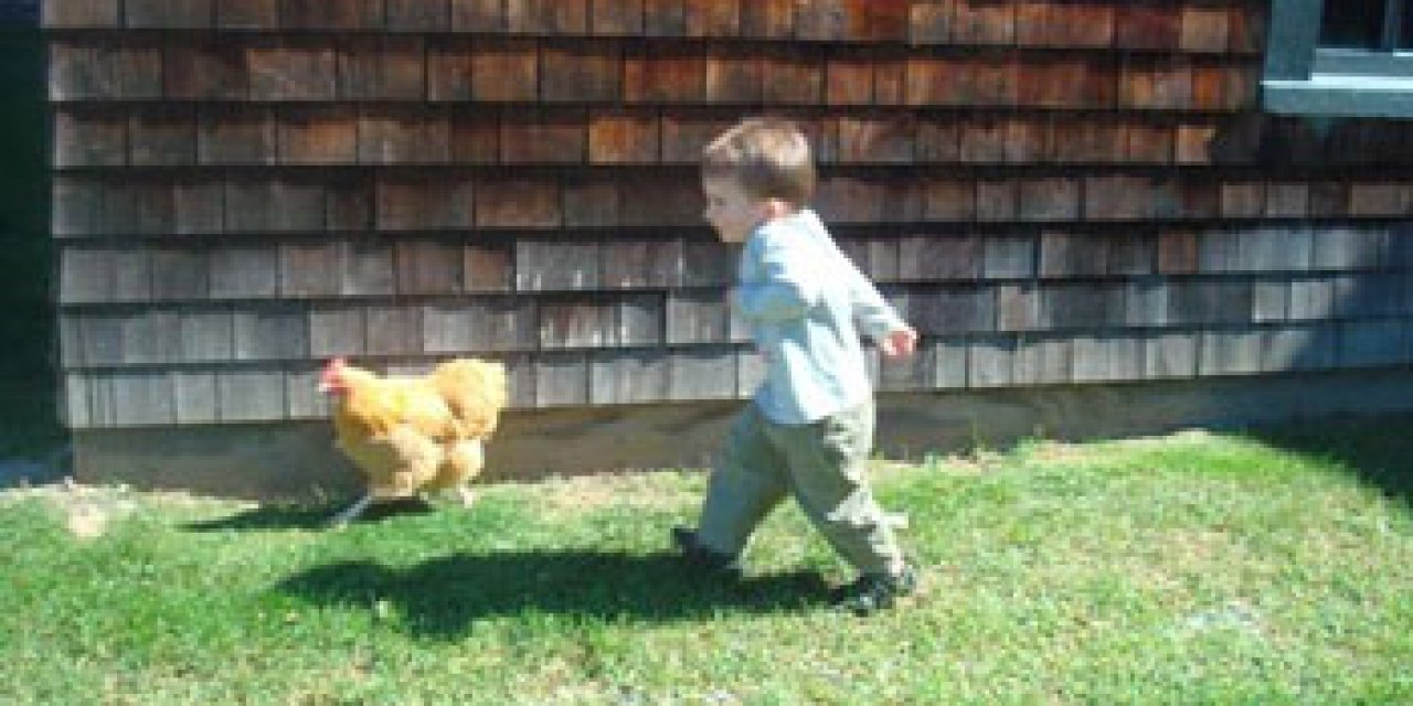 Pick-A-Chick farm-style eatery makes it fun to eat chicken