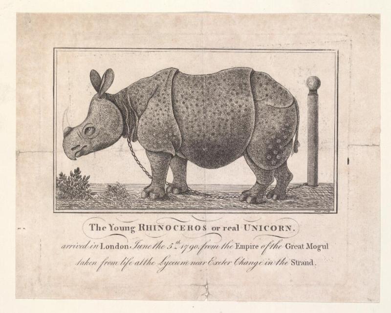 rhinoceros or unicorn
