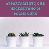 La guida completa alle piante da appartamento che necessitano di poche cure